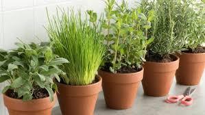 Ervas temperos e hortalicas